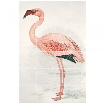 IXXI - Greater Flamingo